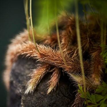 Lave Plant Roots