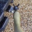 Tow Bar Welly Boot Pull