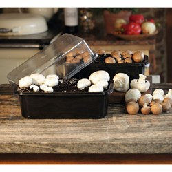 Windowsill White Button Mushroom Kit