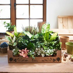Box of 24 Mixed Houseplants