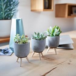 Succulents In Ceramic Pots: Set of 3