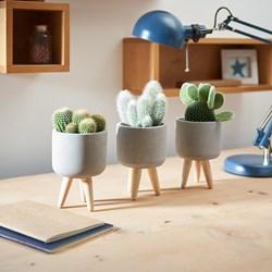 Cactus In Ceramic Pots: Set of 3