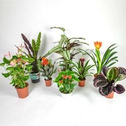 Mystery Plant: Indoor Houseplant