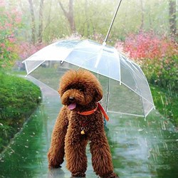 Dog Umbrella | Crazy but it works!