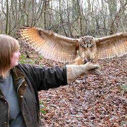 Owl Experience Day