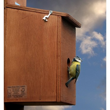 Wireless Nest Cam Bird Box