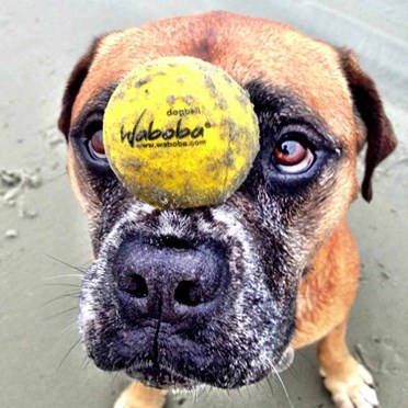 Waboba Dog Fetch Ball